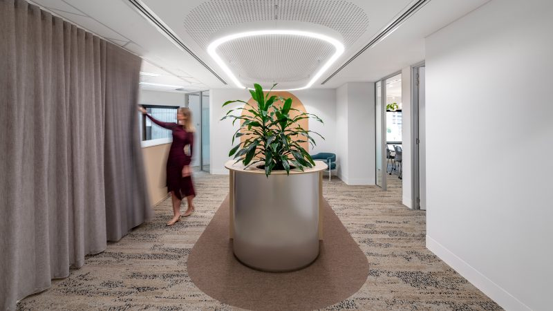 DJSB workplace fitout office entrance with planting and movable curtain